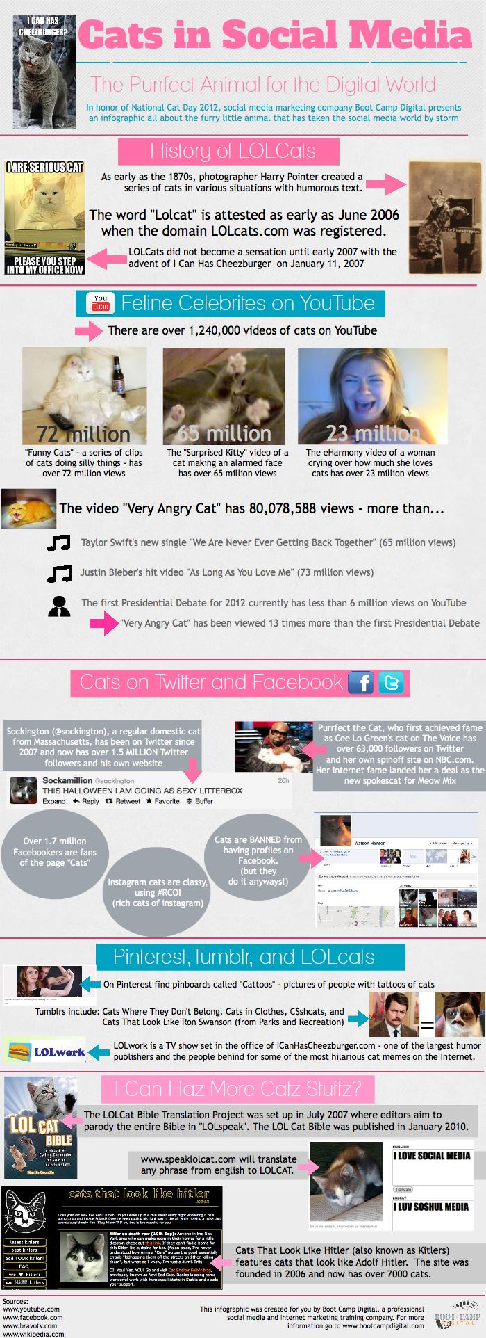 Cats in Social Media
