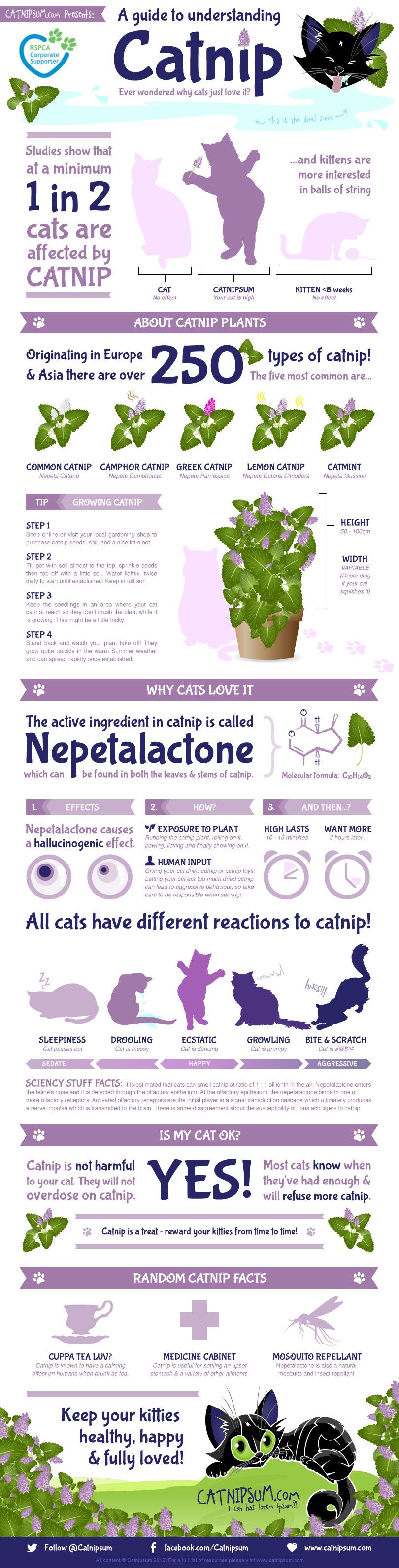 A Guide to Understanding Catnip