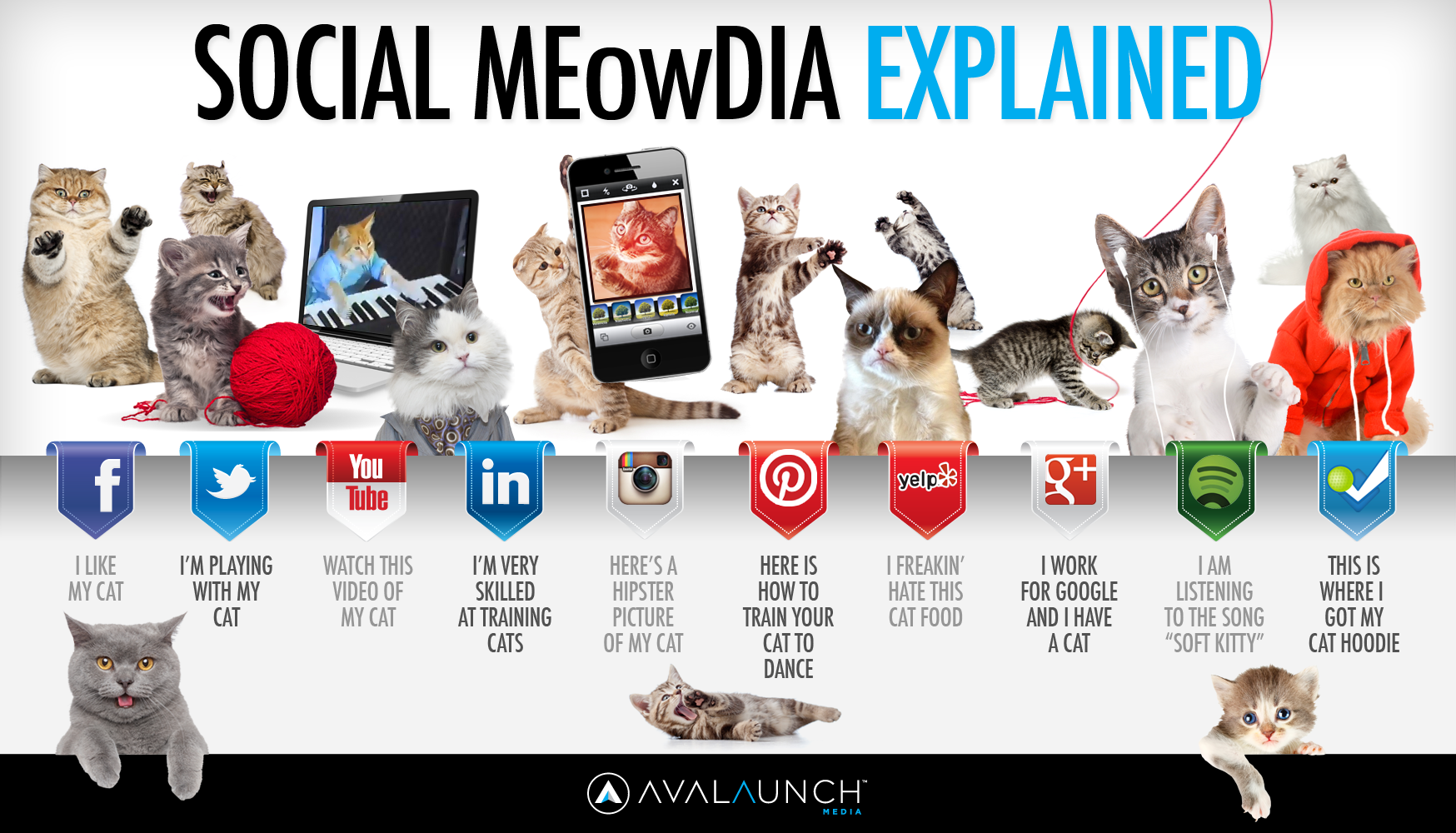 Social MEowDia Explained