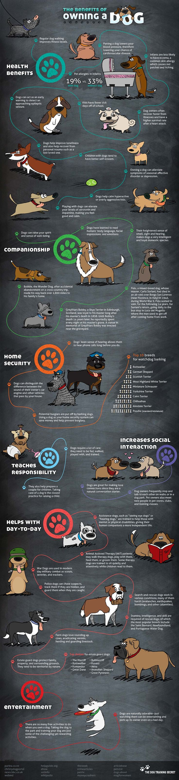 38 Benefits of Owning A Dog