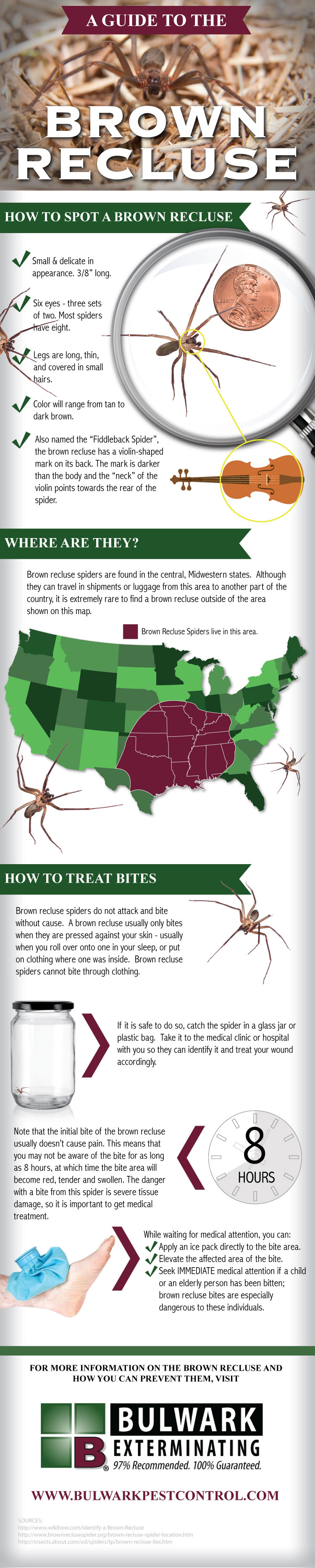 A Guide to the Brown Recluse Spider