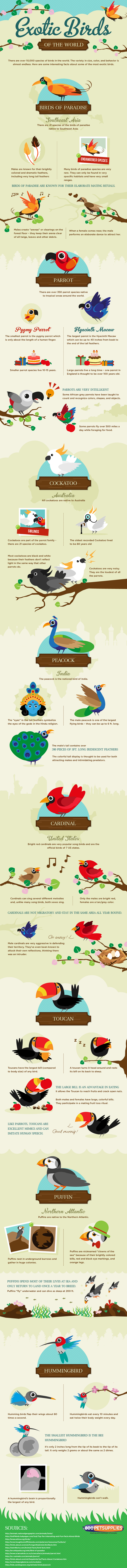 The-most-exotic-birds-infographic-757[1]