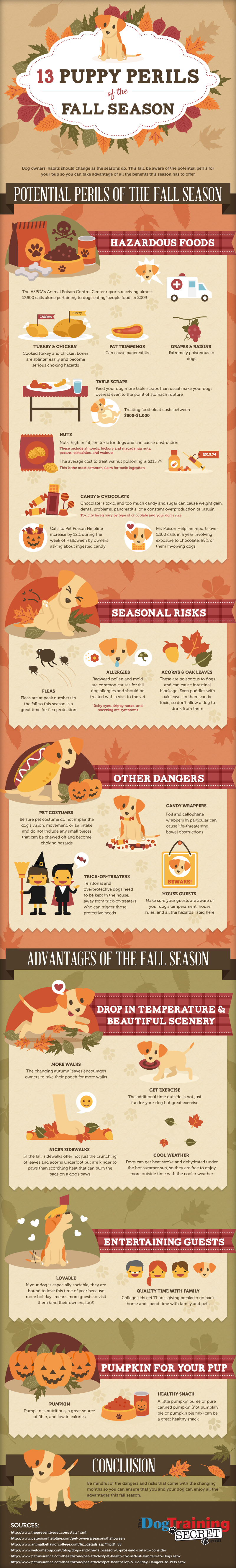 13 Puppy Perils of The Fall Season