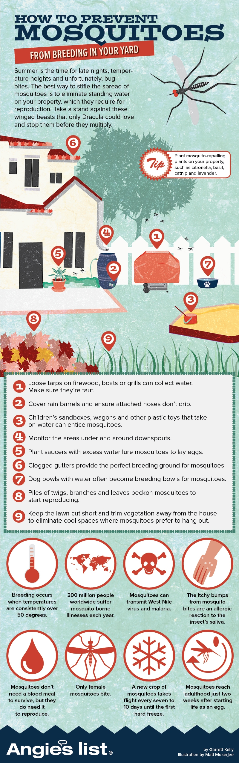 How To Prevent Mosquitoes From Breeding in Your Yard