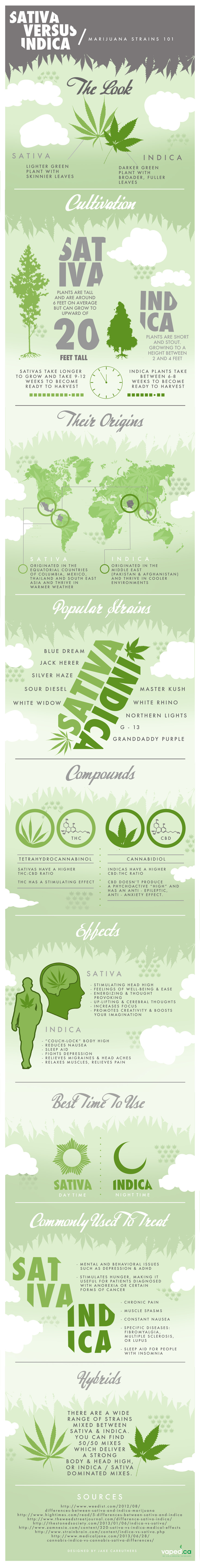 Sativa vs Indica: The Two Major Strains of Cannabis