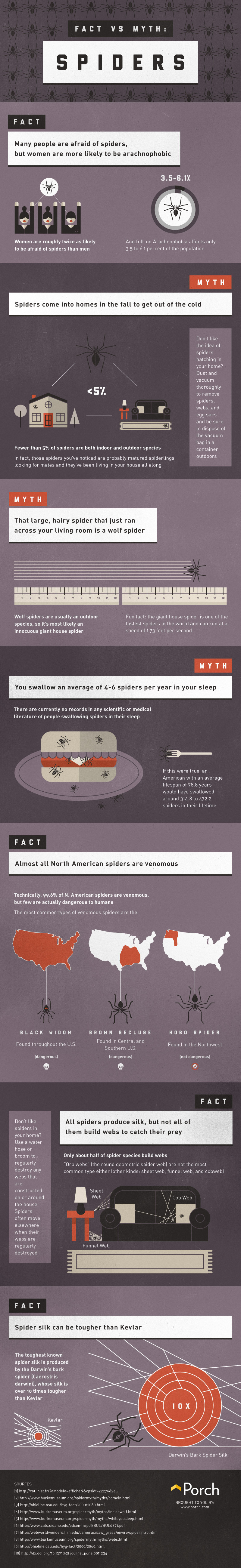 Facts Vs Myths About Spiders