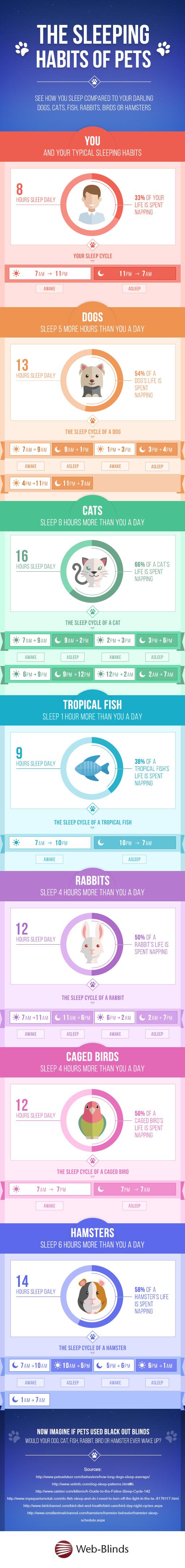 How Much Do Pets Sleep?