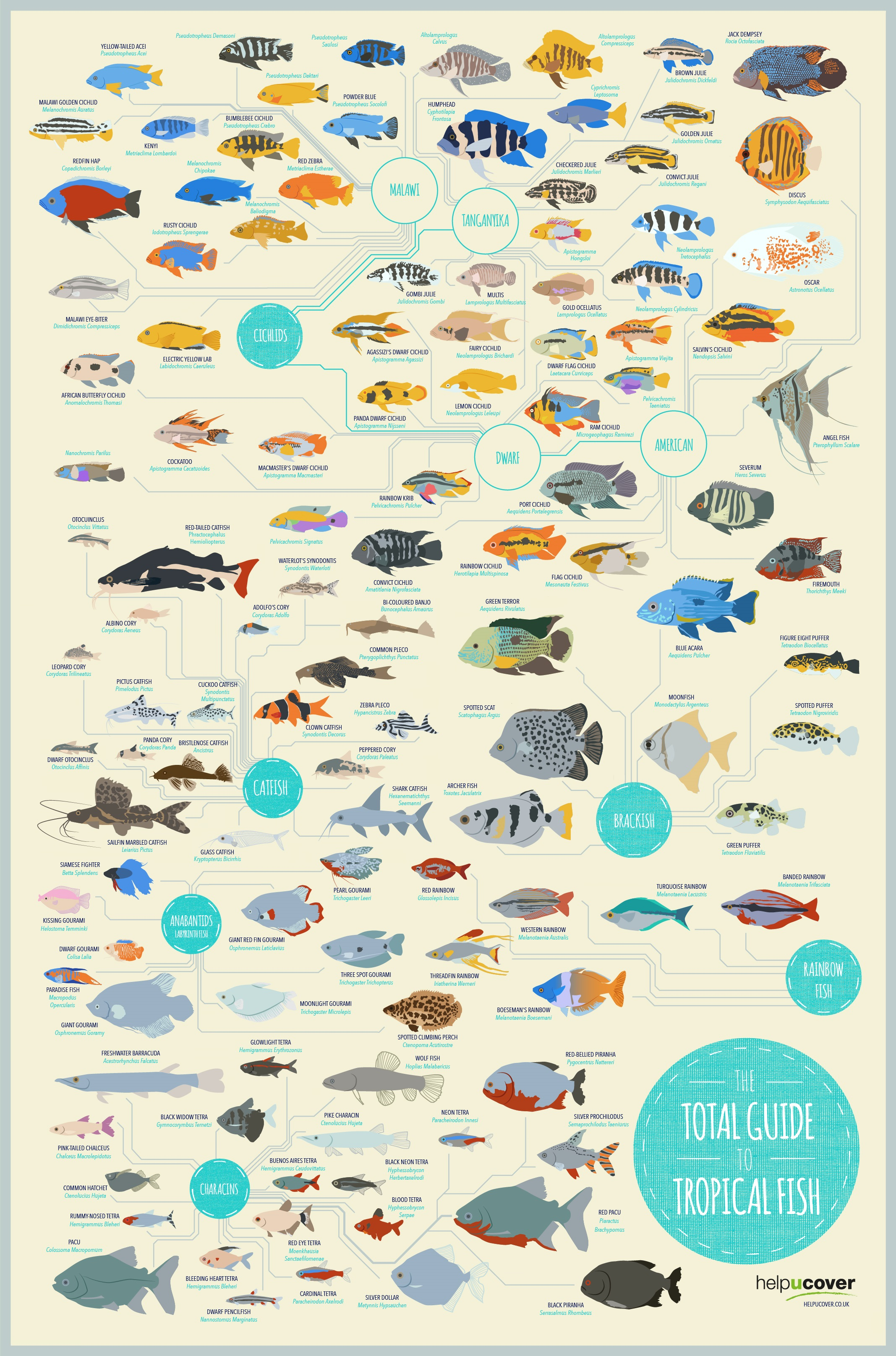 Tropical ocean fish names for Freshwater fish guide