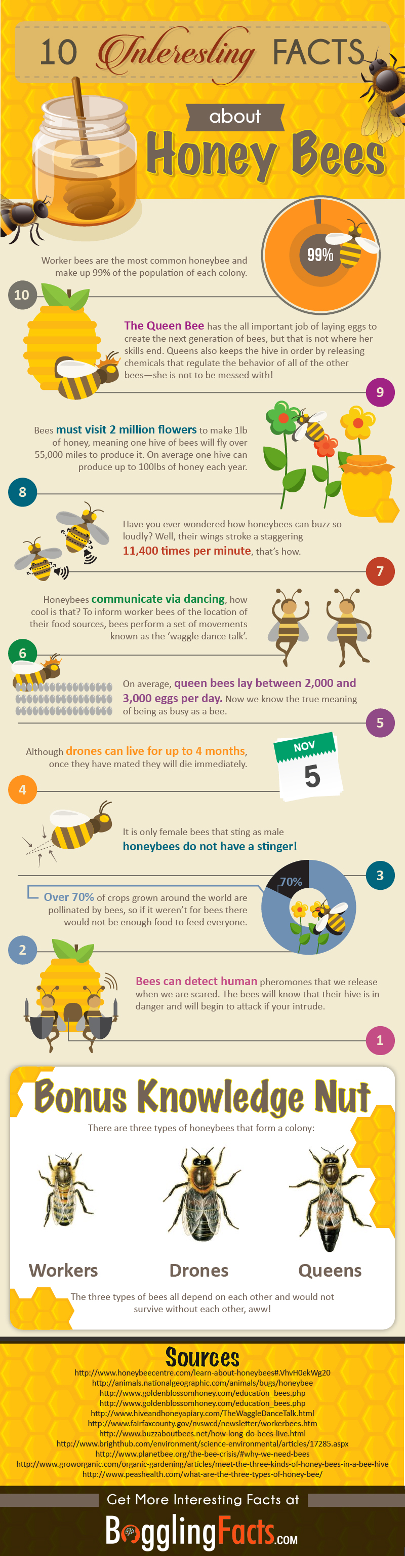 10 Fascinating Honey Bee Facts You Didn't Know [Infographic]