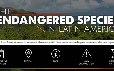 The Endangered Species In Latin America