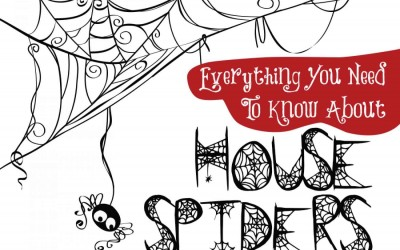 Everything You Need To Know About House Spiders