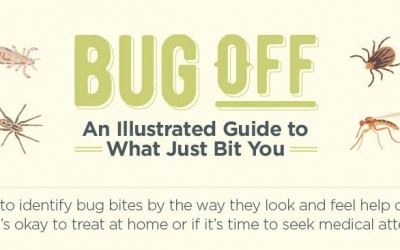 Bug Off – An Illustrated Guide To What Just Bit You