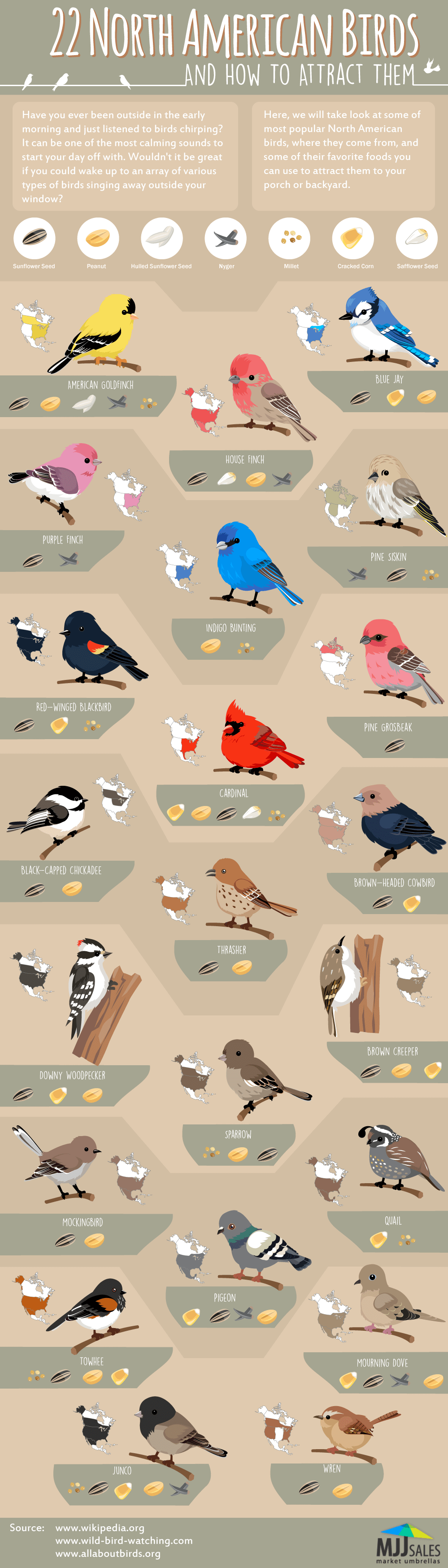 22 North American Birds and How to Attract Them
