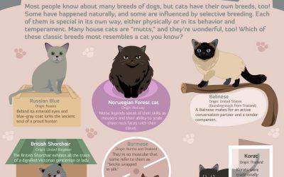 A Cavalcade of Cats!