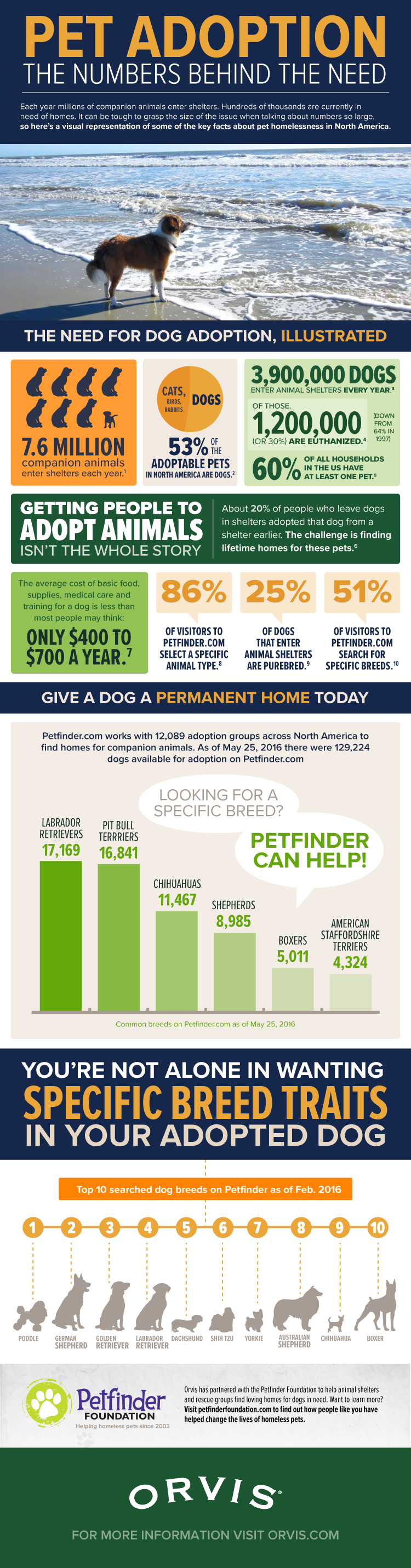 Pet Adoption: The Numbers Behind the Need [Infographic]
