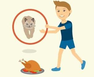 How to Teach Your Cat to Do Tricks