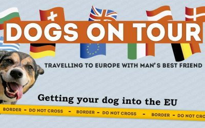 Traveling In Europe With Your Dog