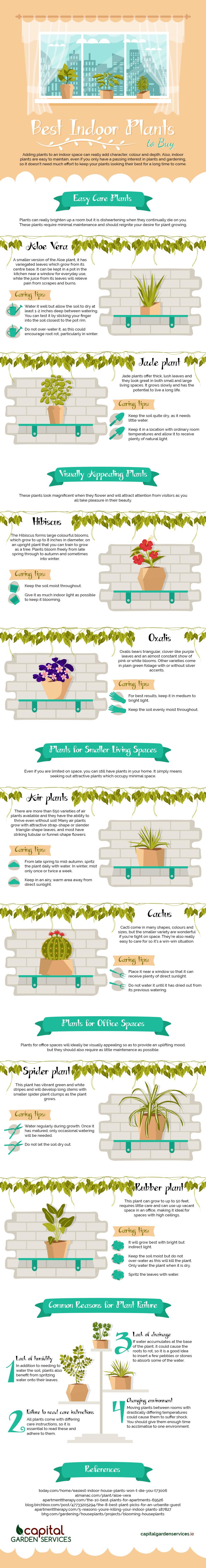 Best Indoor Plants to Buy