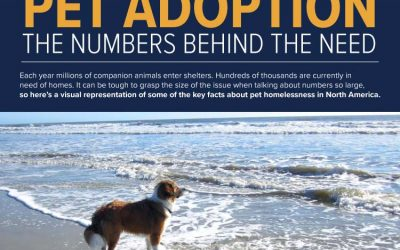 Pet Adoption: The Numbers Behind the Need