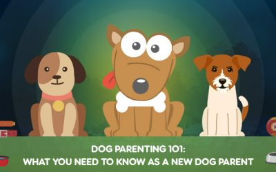 Dog Parenting 101: What You Need To Know as a New Dog Parent