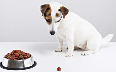 10 Reasons Why Your Dog Won't Eat
