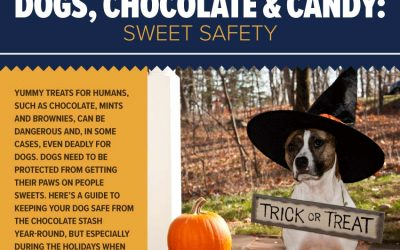 Dogs, Chocolate & Candy: Sweet Safety