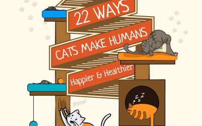 22 Ways Cats Make People Happier And Healthier