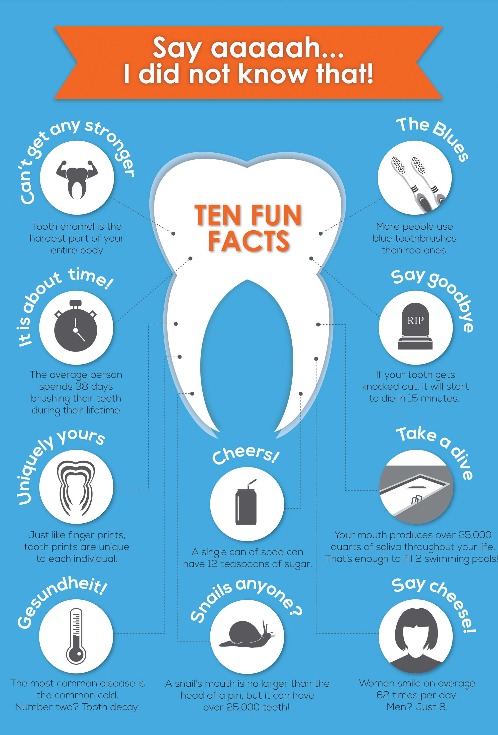 tooth facts