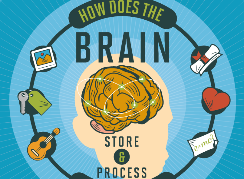 how does the brain store and process memories   infographic