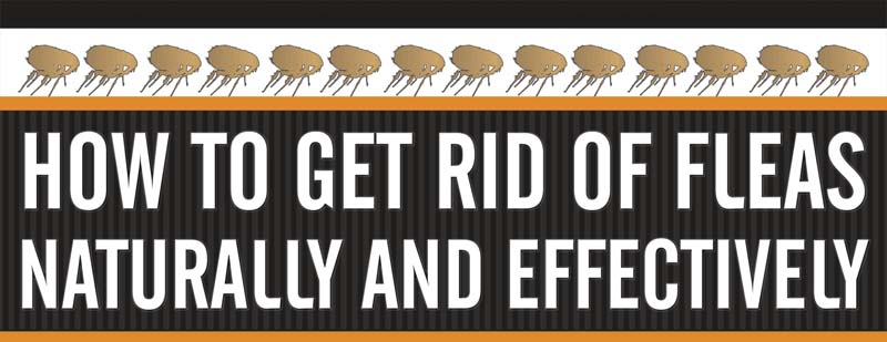 how to get rid of fleas naturally and effectively infographic. Black Bedroom Furniture Sets. Home Design Ideas