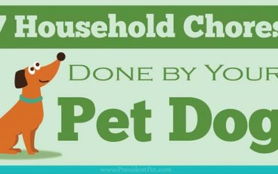 7 Household Chores That Can Be Done by Your Dog