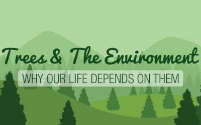 Trees & The Environment: Why Life Depends On Them