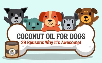 The 29 Benefits Of Coconut Oil For Dogs