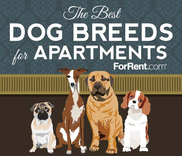 Best Dog For Apartment: The Best Dog Breeds For Apartments [Infographic]