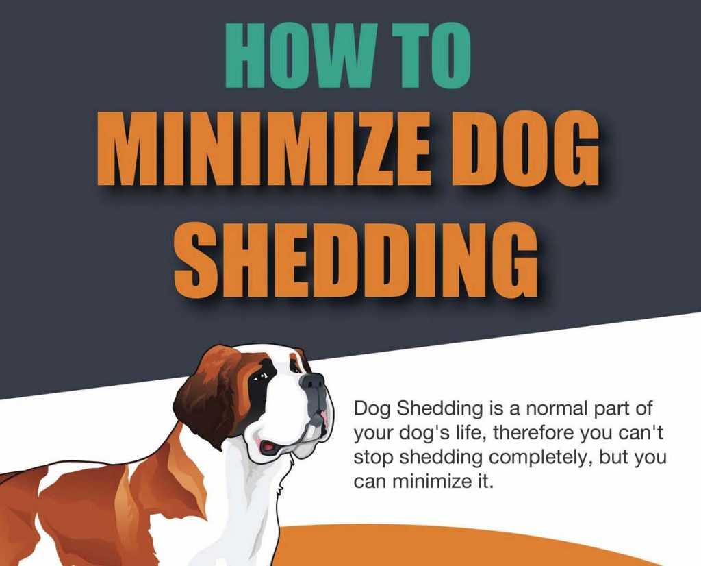 How To Stop And Minimize Dog Shedding Infographic
