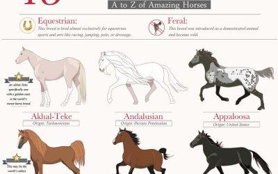 45 Beautiful Horse Breeds