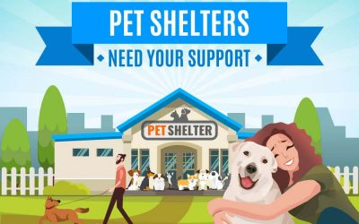 Pet Shelters Need Your Support