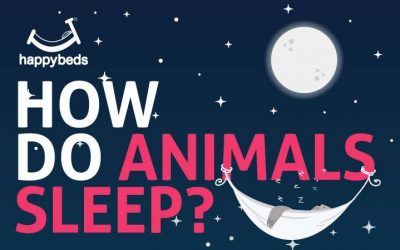 How Do Animals Sleep?
