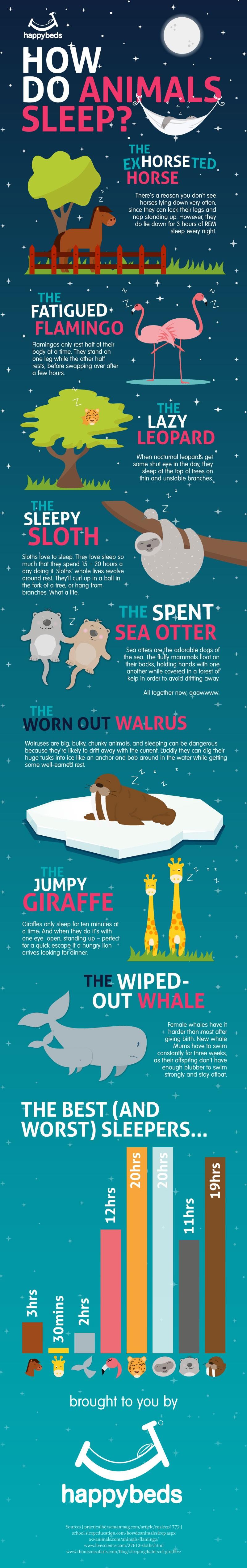 How Do Animals Sleep?