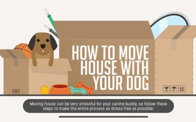 How To Move With Your Dog