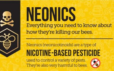 Neonics – How They're Killing Our Bees