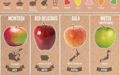 37 Apple Varieties Around the World & Their Flavor Profiles
