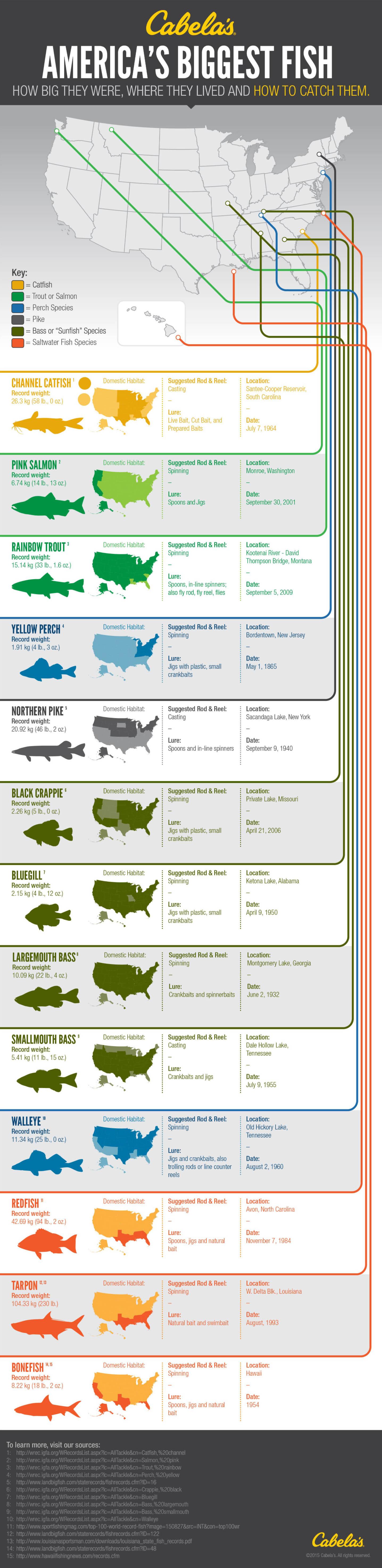 America's Biggest Fish