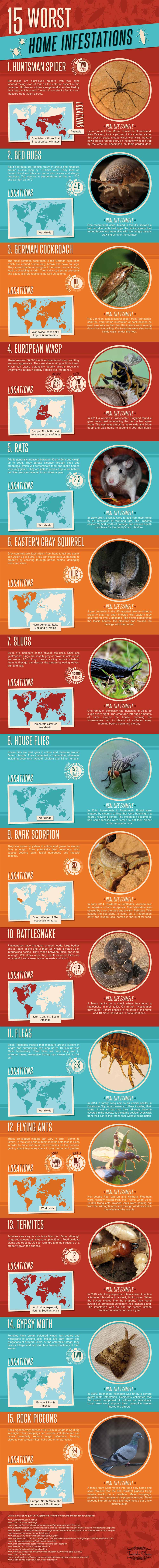 Top 15 Worst Home Infestations From Around The World