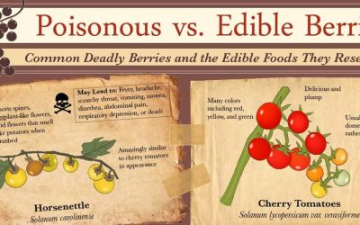 Poisonous vs Edible Berries – Deadly Berries & the Edible Foods They Resemble
