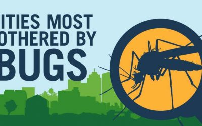 Worried About Insects in Your Yard? You're Not Alone
