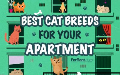 Which Cat Breed is Best for My Apartment?