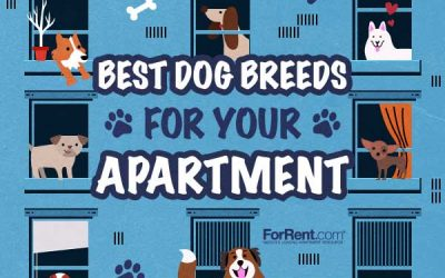 Apartment Dogs: Choosing the Best Breed