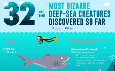 32 of the Most Bizarre Deep-Sea Creatures Discovered