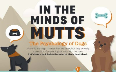 Dog Psychology: In the Minds of Mutts